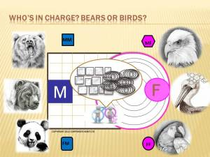 GENDER DYNAMICS Bears and Birds